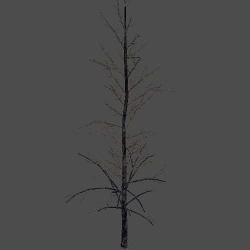 BurnedTree_A