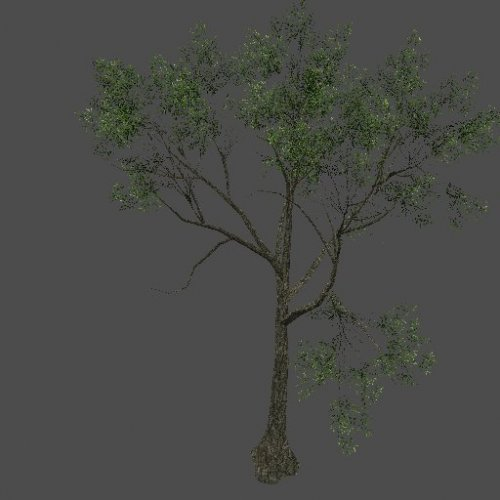 S_ENV_TreeSize03_yellow