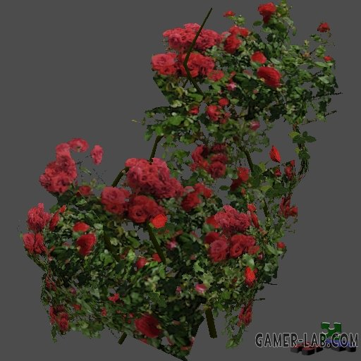 got_RosesBush