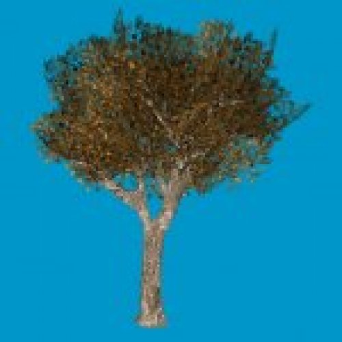 oak_tree1_rl