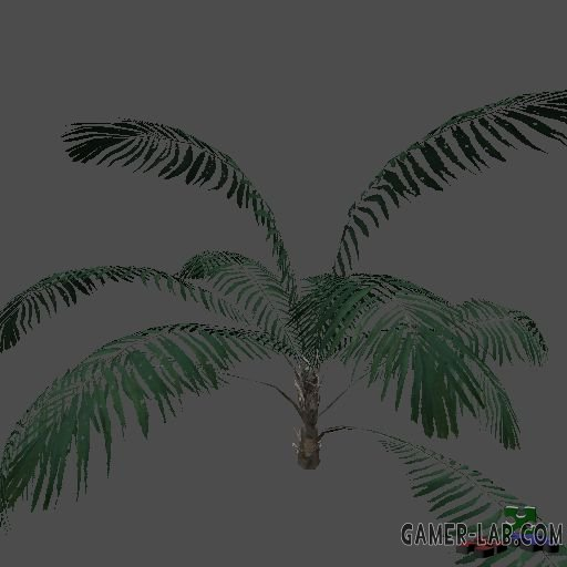 pc_groundPalm1