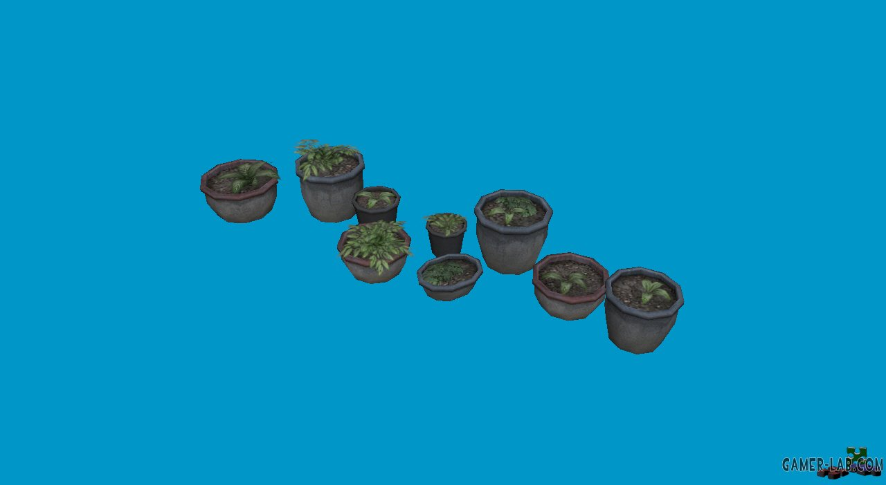 potted plants04