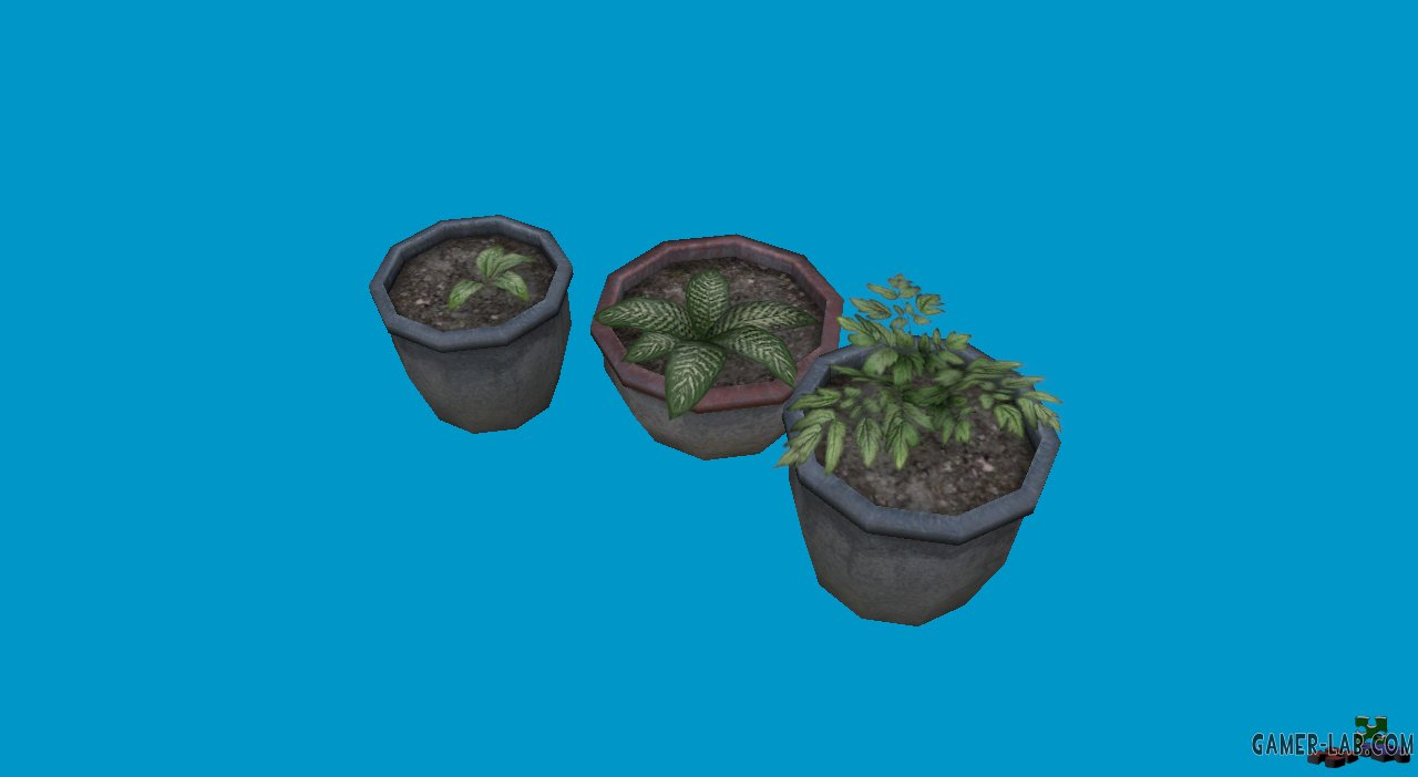 potted plants06