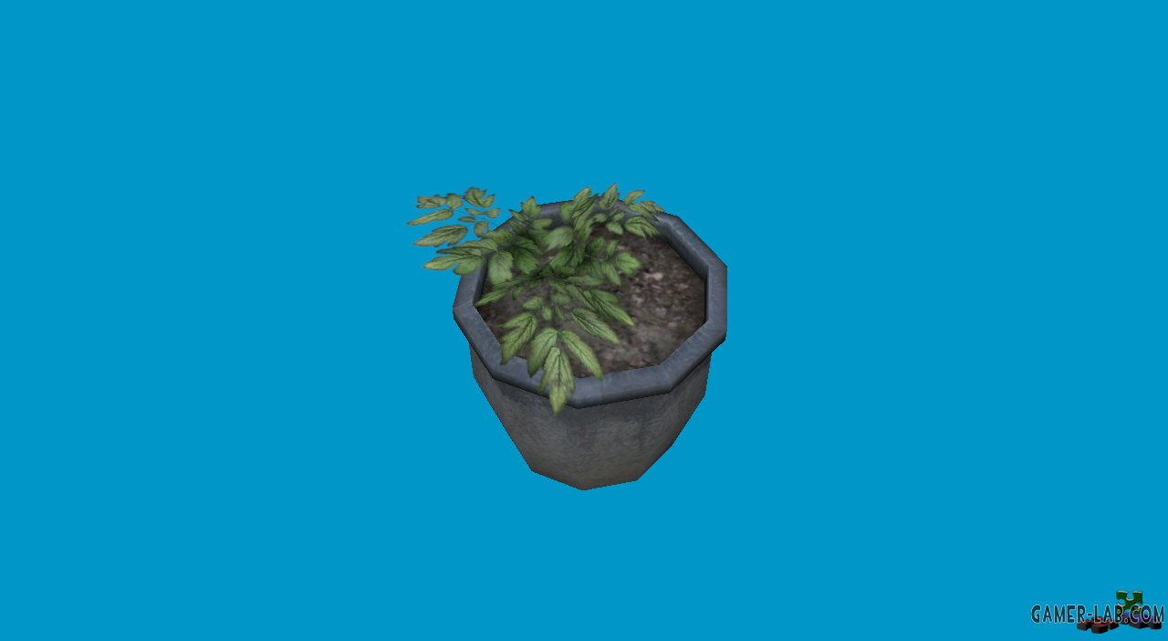 potted plants10