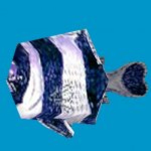 prop_damselfish
