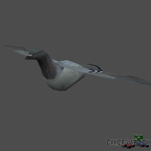 pwr3d_pigeon