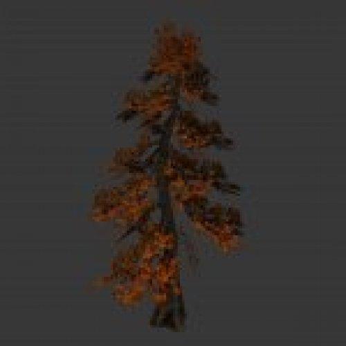 tree_japan_maple_orange.mdl