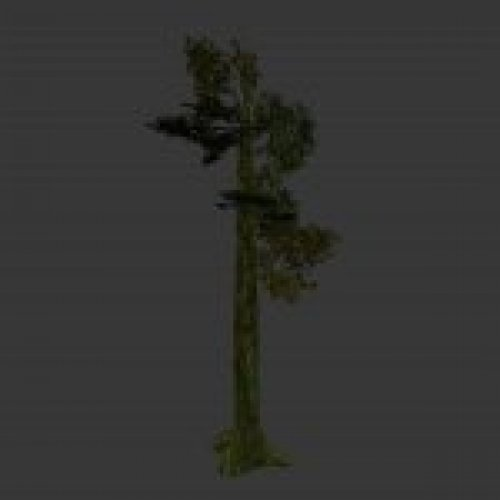 tree_jungle02.mdl