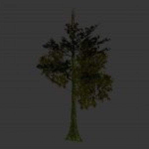 tree_jungle_05.mdl