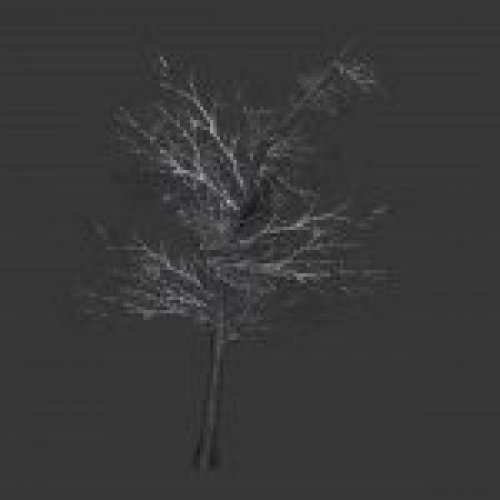 tree_noleaves2.mdl
