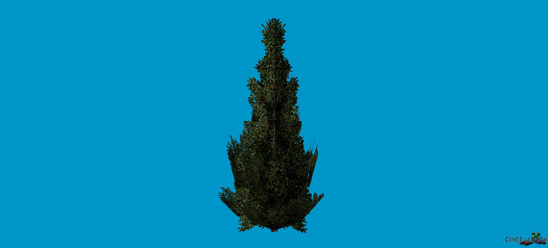 woods_spruce