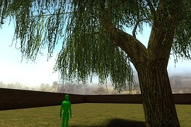 Weeping_Willow_01