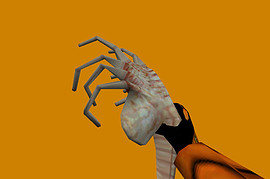 Alien's facehugger